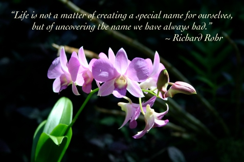 Richard Rohr name